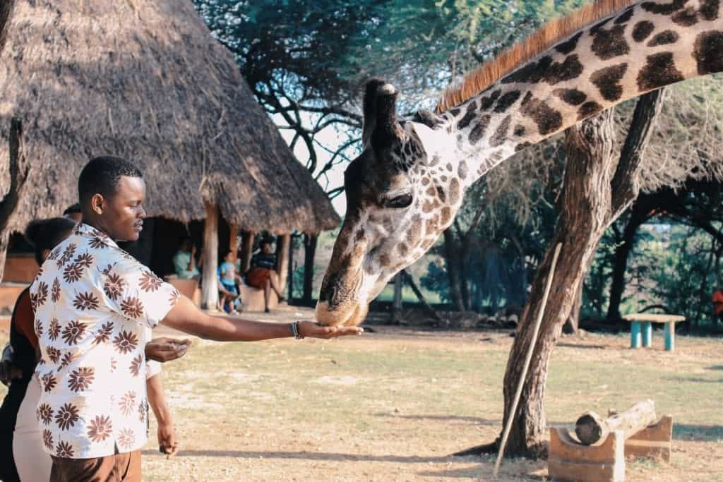 Best Experiences To Try On Your South Africa Vacation