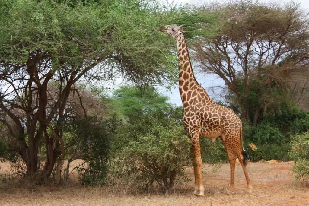 Best Safari In Africa: A Quick Guide For Beginners