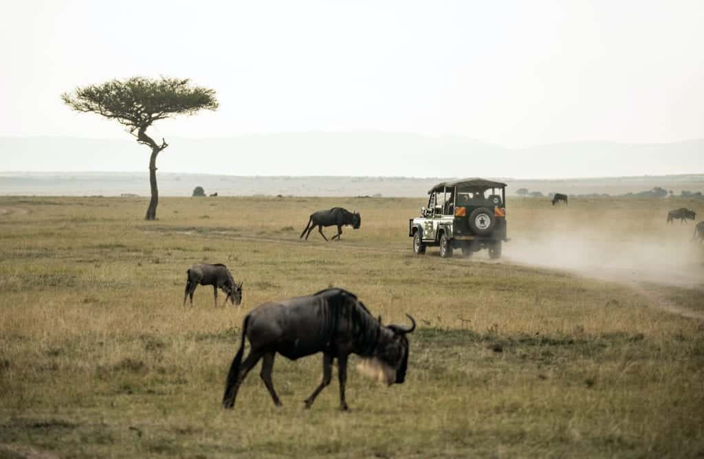 Here Is The Full Guide To African Safari Vacation
