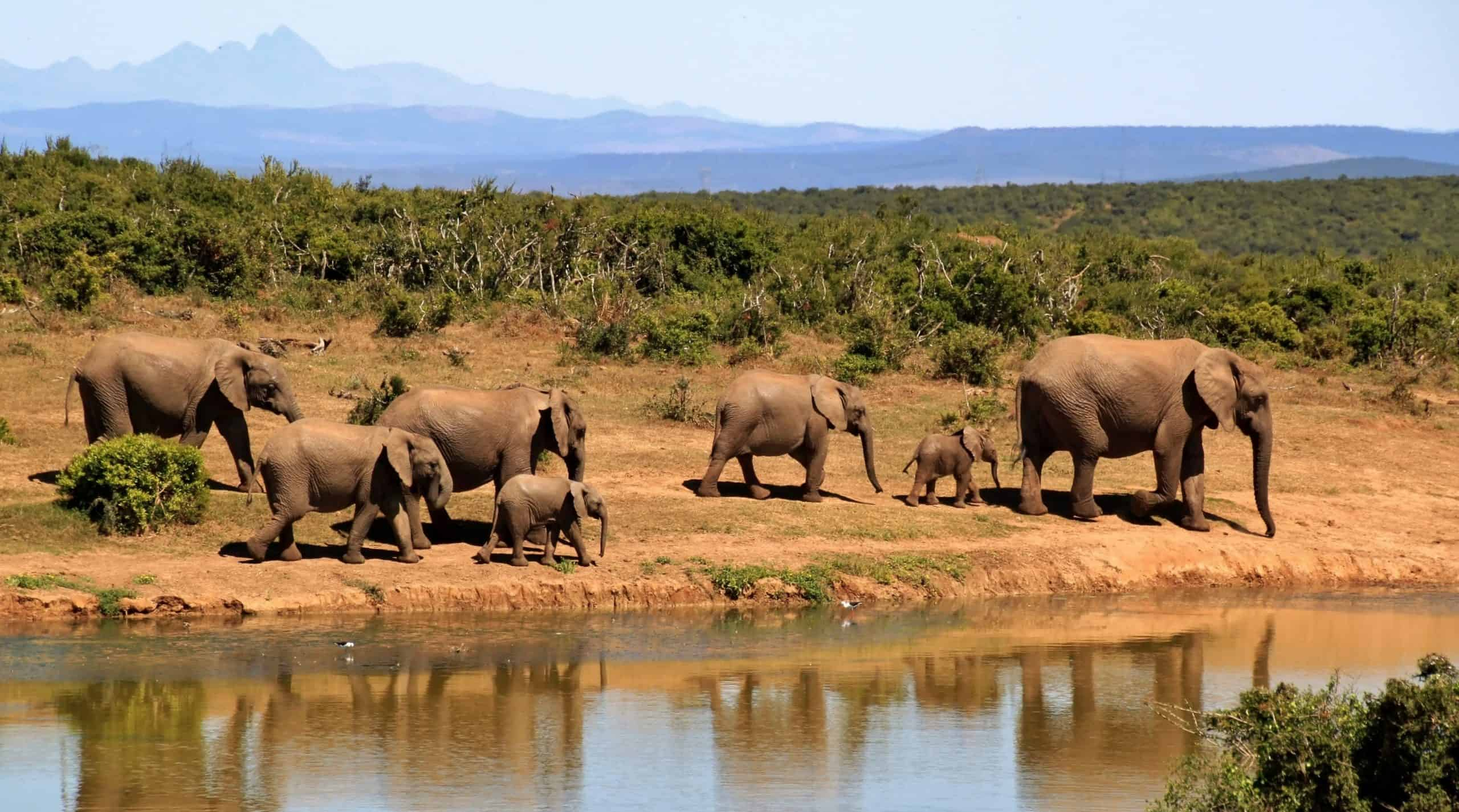 The A - Z Guide Of African Safari Vacation